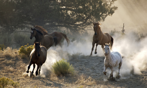 Horse Sense - How Equine Assisted Coaching can help Leaders in your Organisation